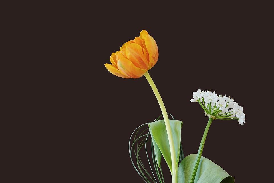 Flowers, Tulip, Blossom, Bloom, Orange, Leek Flower