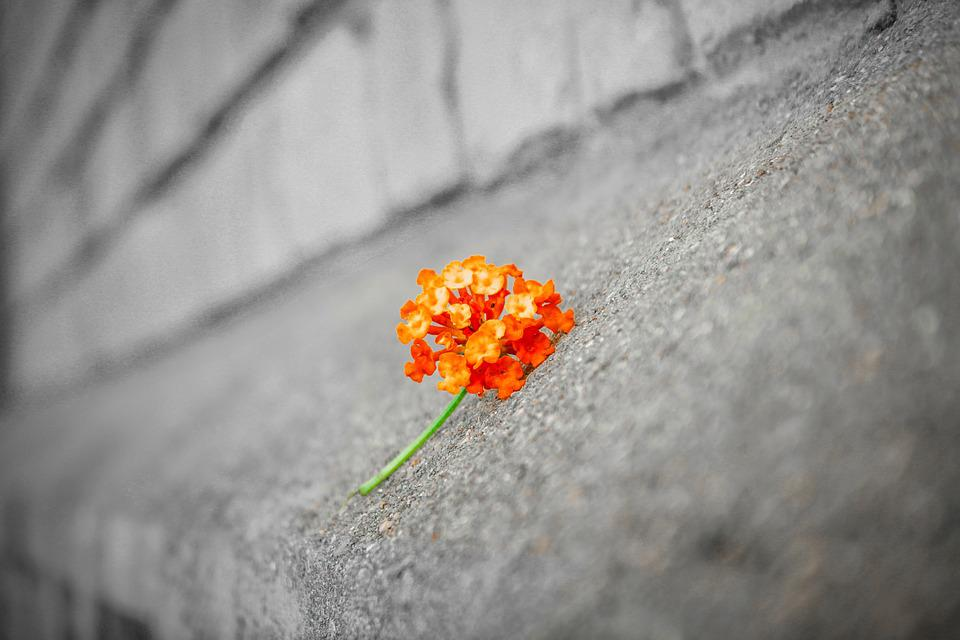 Flower, Black And White, Background, Brick, Orange