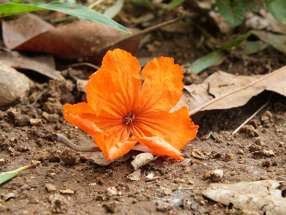 Orange, Flower, Orange Brown, Green, Earth