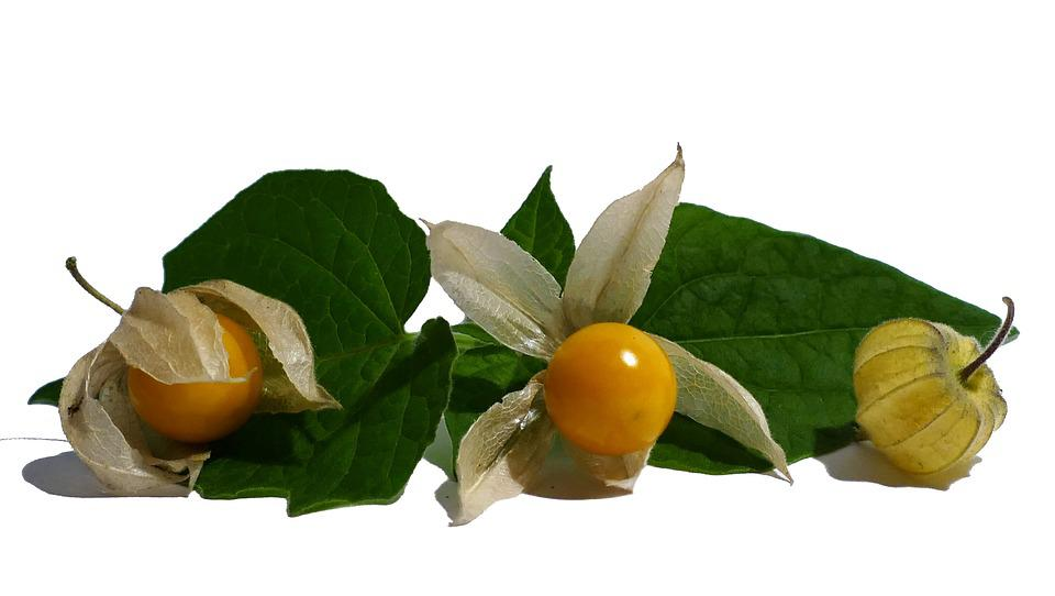 Physalis, Cape Gooseberry, Fruit, Orange, Exotic