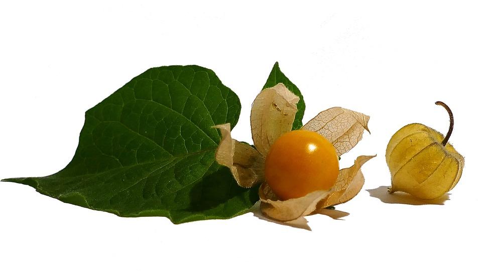 Physalis, Cape Gooseberry, Fruit, Exotic, Orange