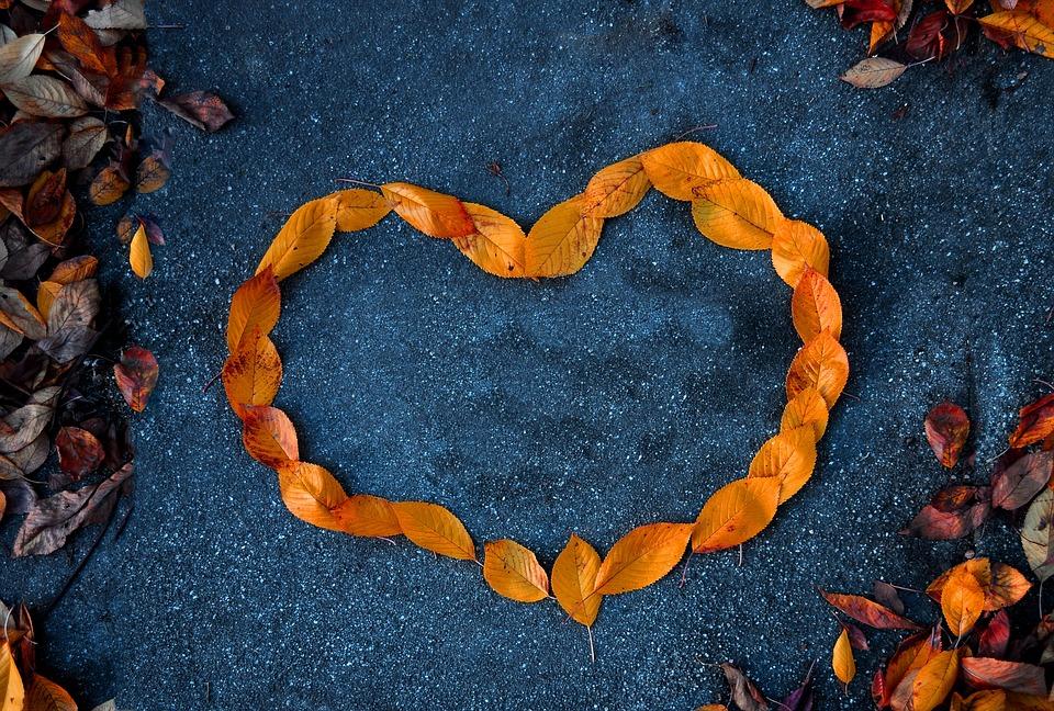 Heart, Foliage, Orange, Autumn, Contrast