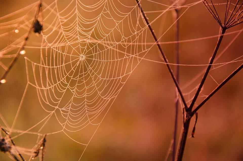 Web, Dew, Macro, Orange, Autumn, Drops, Detail, Twigs