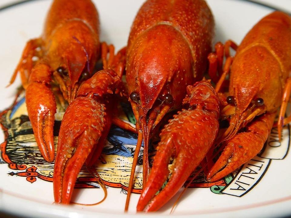 Lobster, Crawfish, Shear, Orange, Red, Eyes, Body