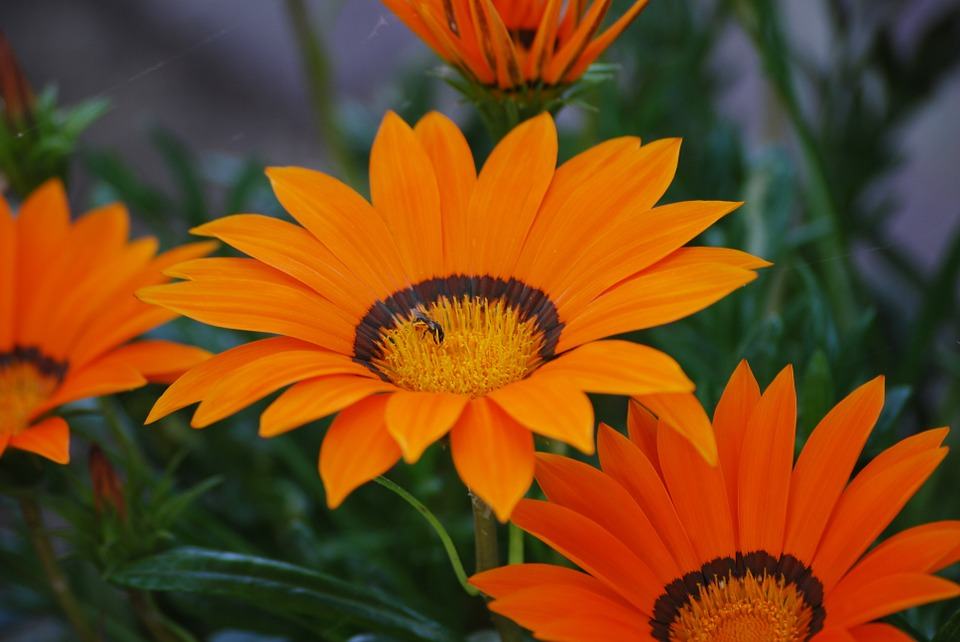 Bloom, Orange Flower, Bee