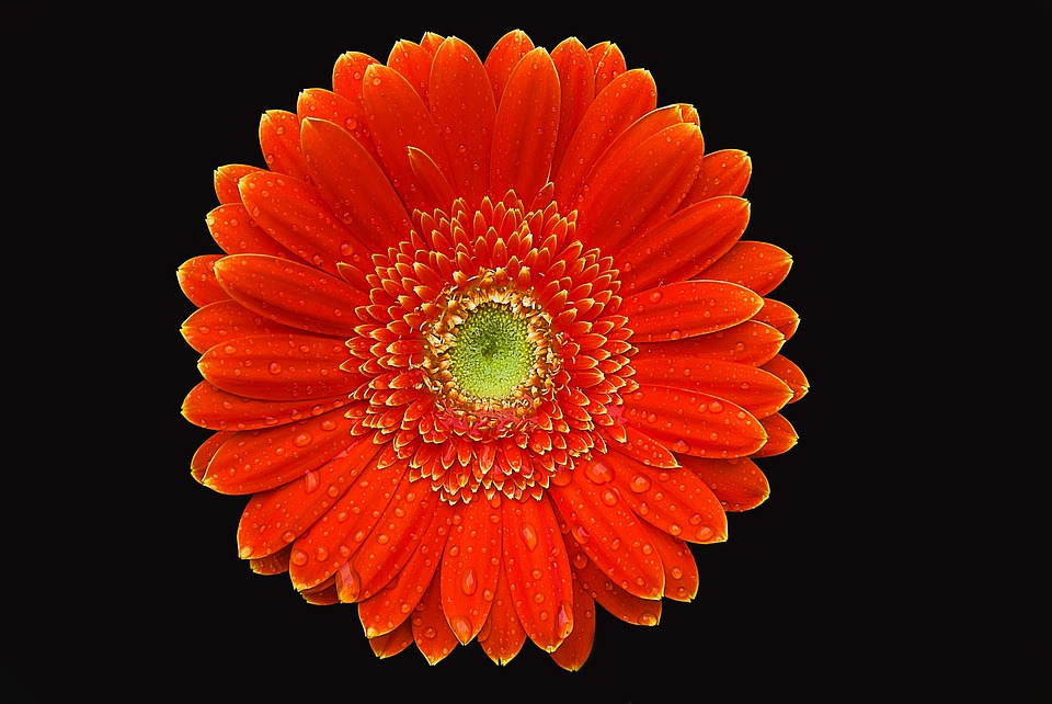 Gerbera, Flower, Color, Summer, Creative, Orange Flower