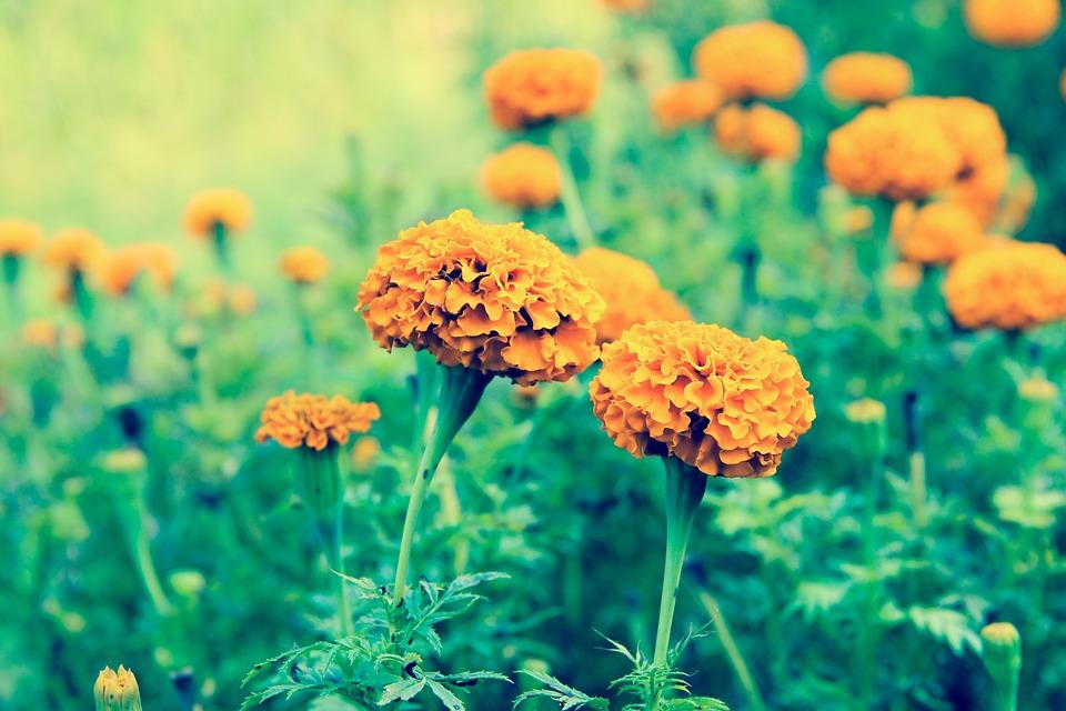 Beautiful Flowers, Flower, Flower Garden, Orange Flower