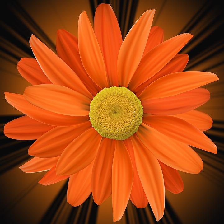 Color, Petal, Flower, Orange Flower, Flowers