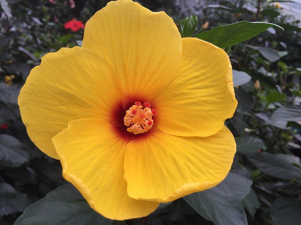 Flower, Yellow, Bloom, Plant Petal, Orange Flower