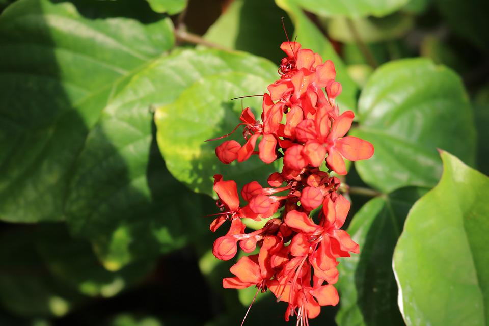 Red, Orange, Flowers, Color, Colorful, Bright, Nature