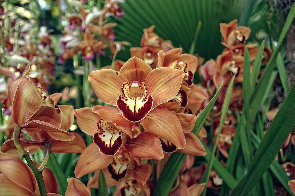 Free photo orange flowers exotic yellow orchid burgundy max pixel orchid orange burgundy yellow flowers exotic mightylinksfo