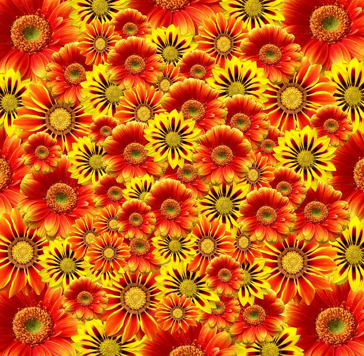 Flowers, Orange, Blossom, Bloom, Orange Flowers, Plant