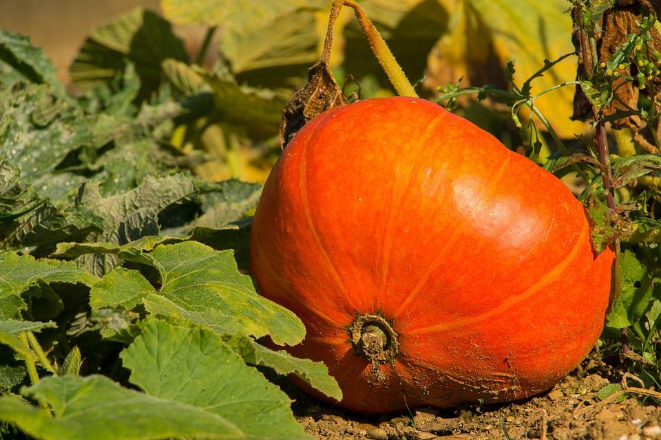 Pumpkin, Orange, Autumn, Halloween, Hokkaidokürbis