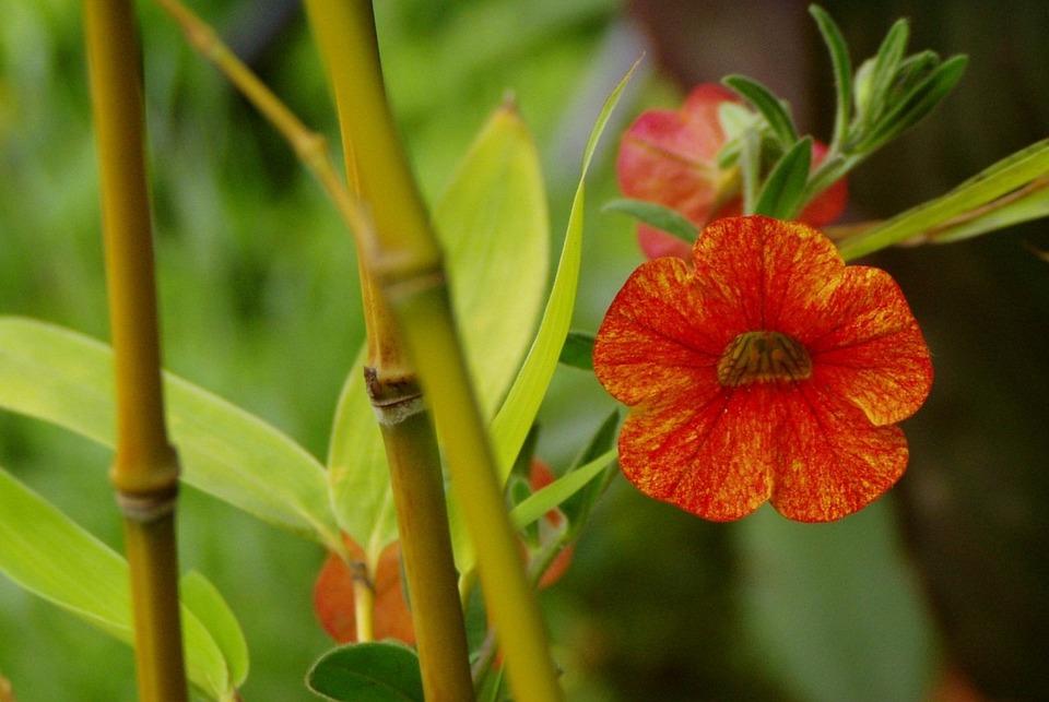 Bamboo, Plant, Green, Japanese, Garden, Orange