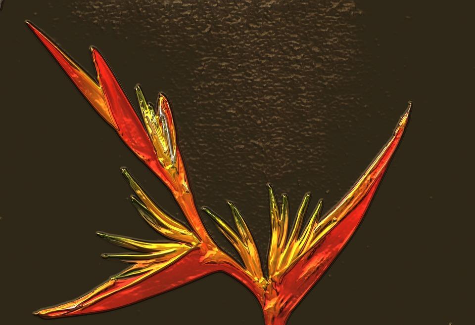 Strelitzia Flower, Flower, Metallic, Orange, Yellow