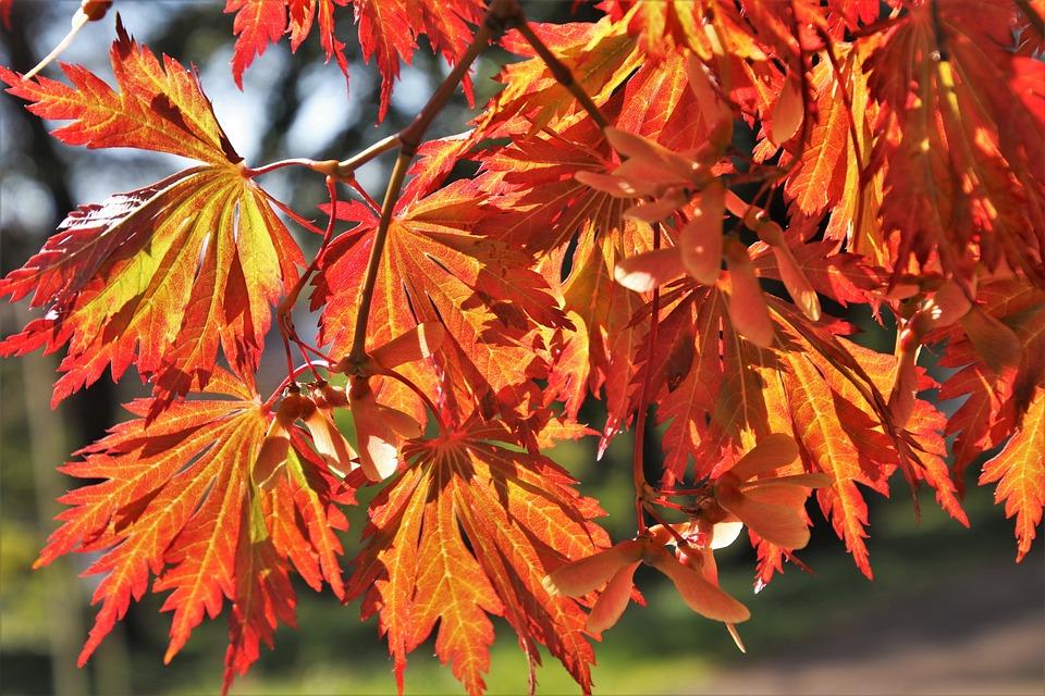Orange, Foliage, Clone, Nature, Colors Of Autumn