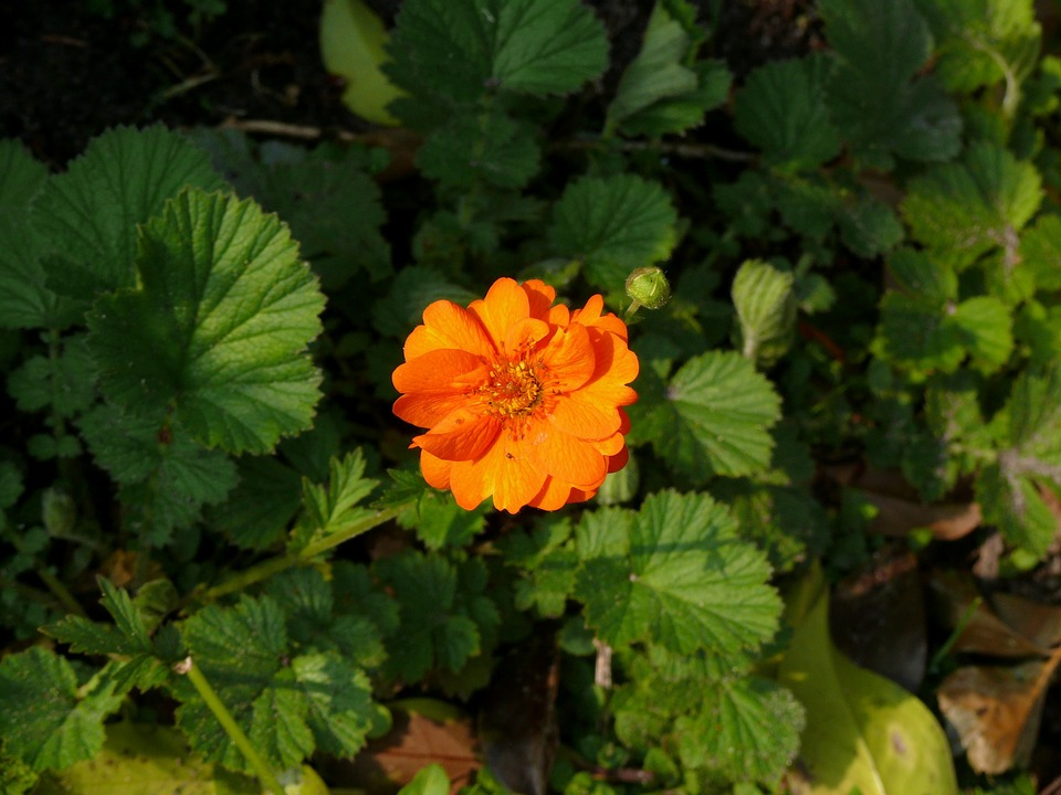 Zinnia, Flower, Orange, Garden, Nature, Spring, Bloom
