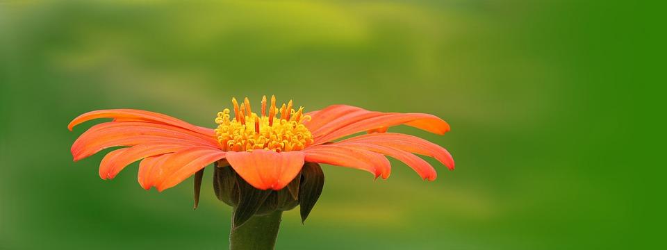 Nature, Plant, Summer, Flower, Bright, Orange