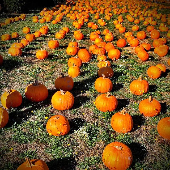 Free photo Orange October Autumn Pumpkin Fall Halloween - Max Pixel