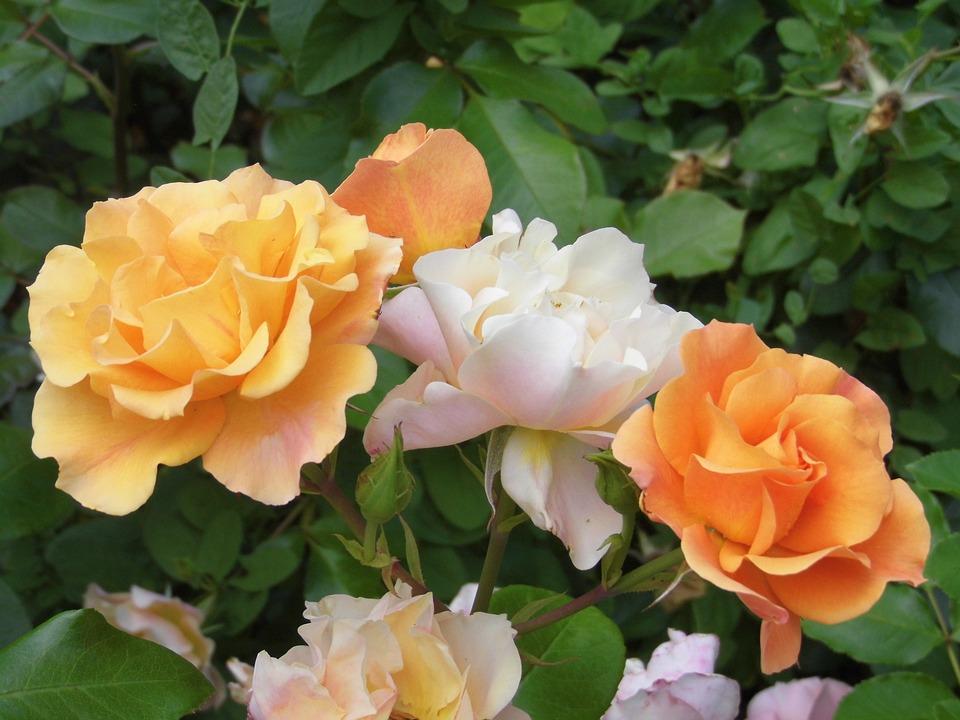 Pink, Flowers, Color, Orange, Flora, Pastel