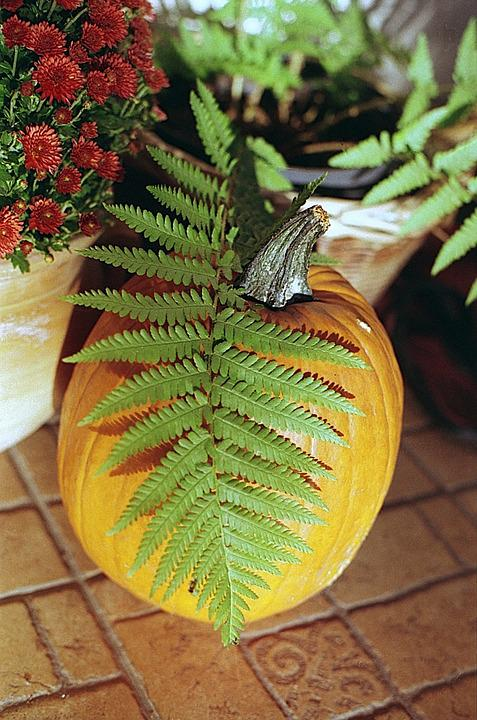 Pumpkin, Fern, Green, Orange, Autumn, Halloween, Fall
