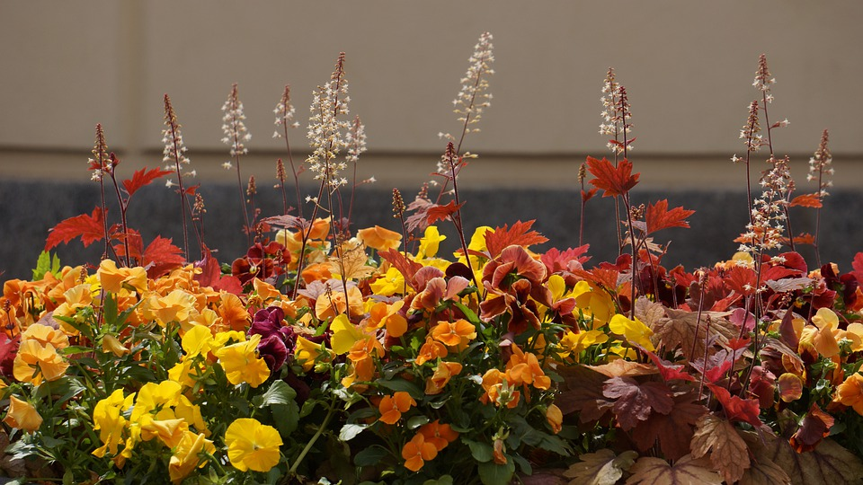 Flower Planting, Flower, Yellow, Orange, Red