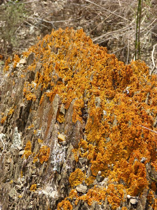 Lichen, Rock, Orange