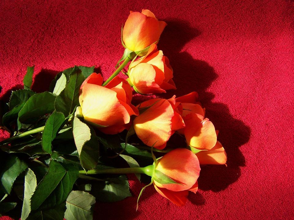 Rose Bouquet, Cut Flowers, Orange