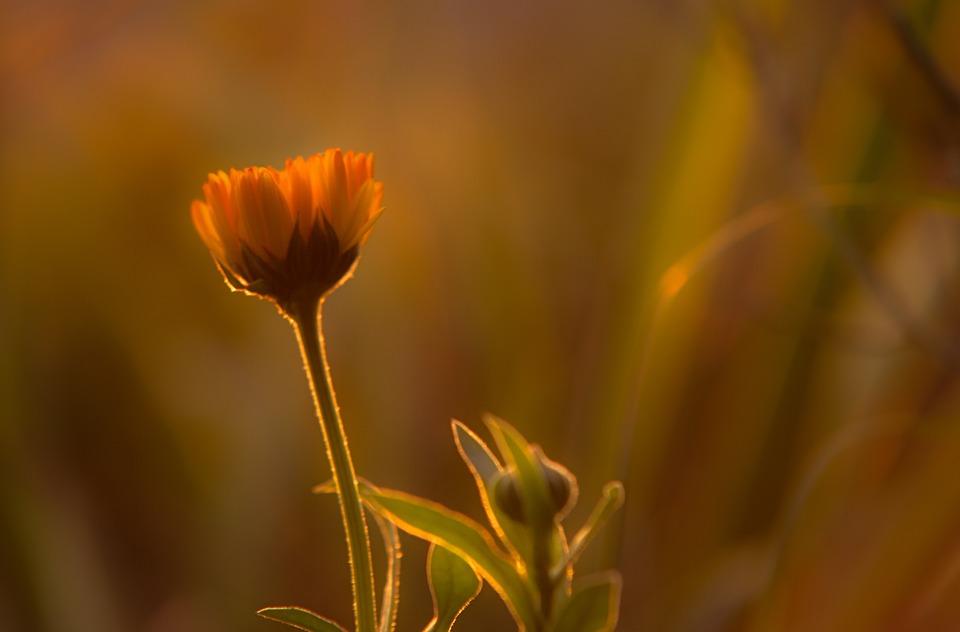 Sunset, Orange, Flower, Sky, Bright, Orange Sky