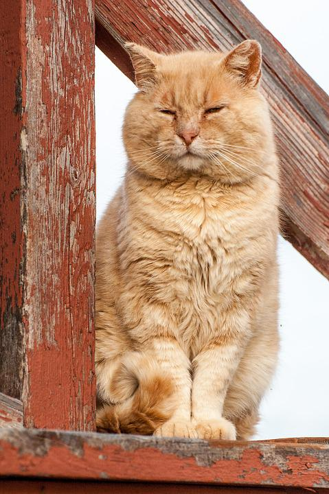 Cat, Sitting, Orange Tabby, Orange, Tabby, Pet, Animal