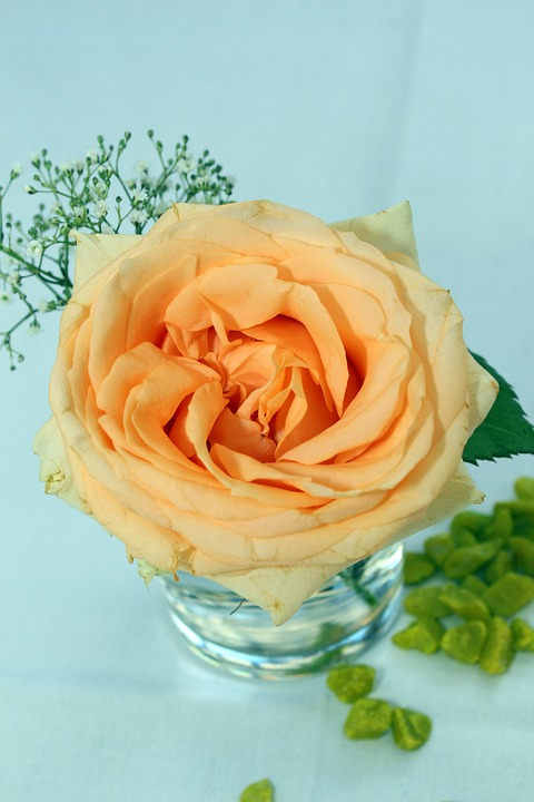 Rose, Orange, Table Decoration, Floral Arrangement