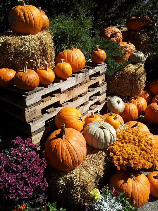 Pumpkin, Fall, Orange, Seasonal, Harvest, Thanksgiving
