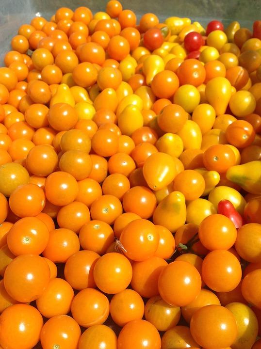 Tomatoes, Food, Farm Life, Orange, Vegetables