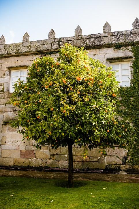 Castle, Orange Tree, Garden, Wall