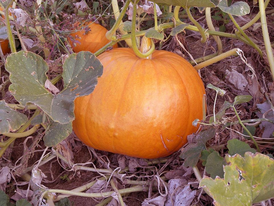 Pumpkin, Food, Orange, Vegetable, Vegan, Veggies