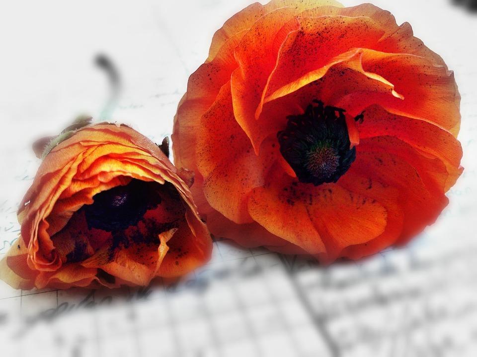 Flower, Violet, Orange