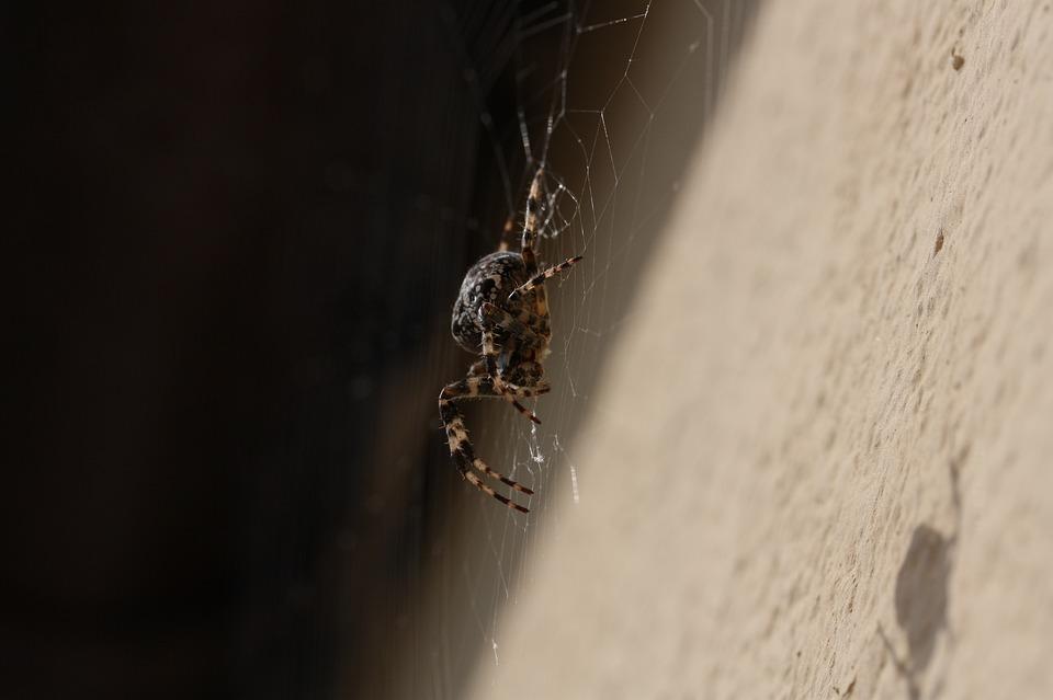 Spider, Network, Close, Orb Web, Cobweb
