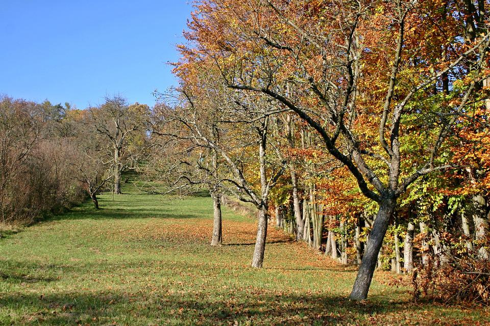 Orchard, Apple Trees, Autumn, Fruit Tree Meadow