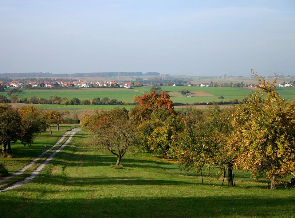 Tree, Orchard, Scattered Fruit Trees, Nature, Landscape