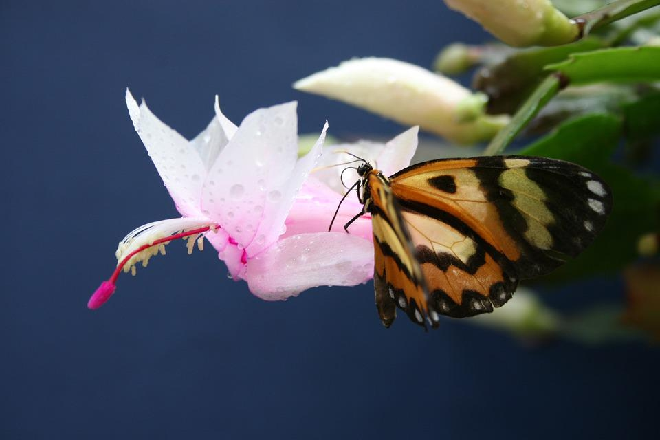 Flower, Nature, Butterfly, Plant, Garden, Orchid