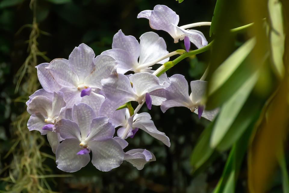 Orchid, Nature, Flower, Flora, Tropical, Plant
