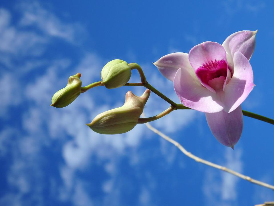 Orchid, Purple, Sky, Flower, Nature, Tropical, Blossom