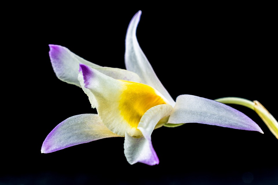 Wild Orchid, Orchid, Flower, Blossom, Bloom
