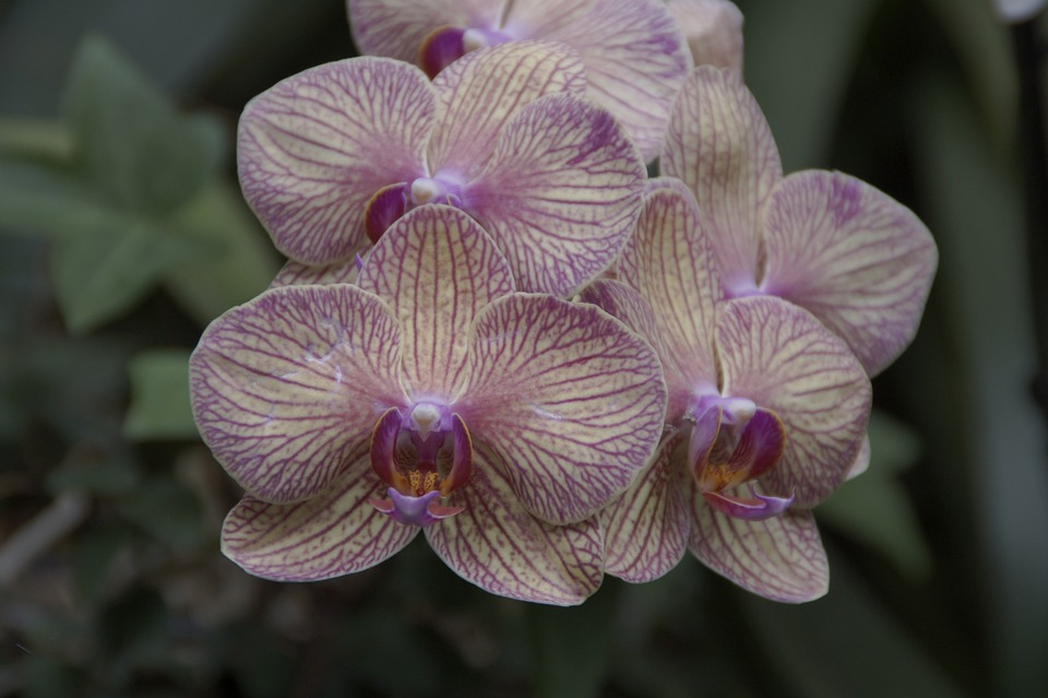 Orchid, Orchids Exhibition, Orchid Breeding, Bloom
