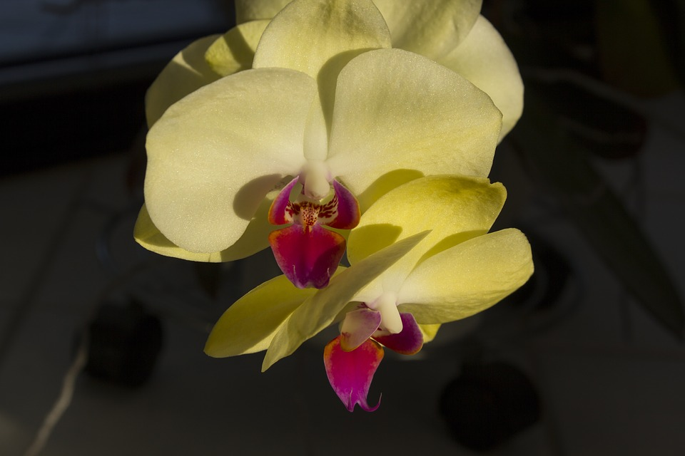 Orchids, Flower, N, Nature, Blossom, Bloom, Close