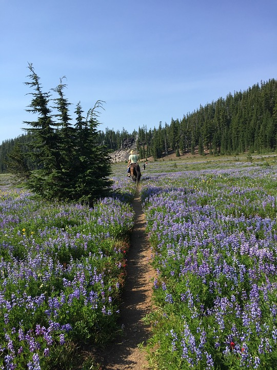 Horseback, Wilderness, Oregon, Hiking, Hunting