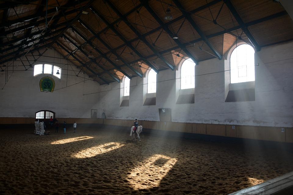 Oregon, Horses, Horse, Stallions, Animal, Run