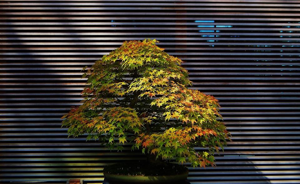 Portland, Oregon, Usa, Scenic, Nature, Outdoors, Trees