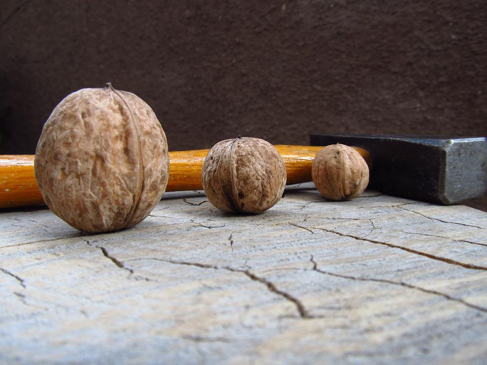 Walnut, Nut, Seed, Brown, Food, Organic, Nutshell