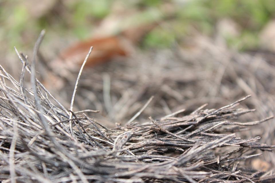 Nest, Trunk, Tree, Wood, Nature, Organic, Stump